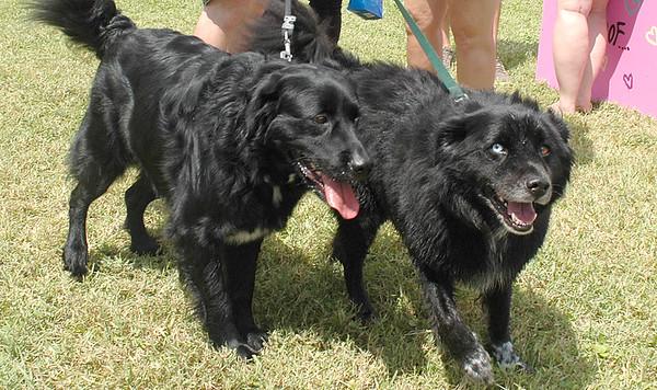 Gulf State Park Dog Park opens